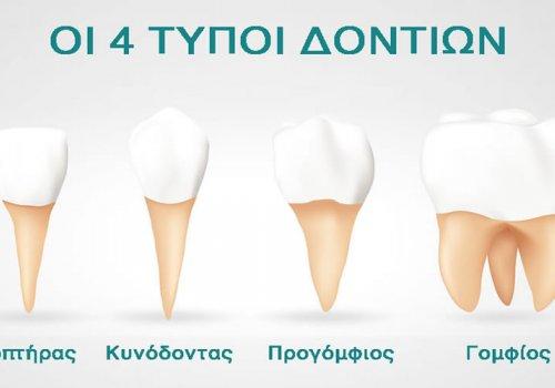 Οι 4 Τύποι Δοντιών και πώς Λειτουργούν